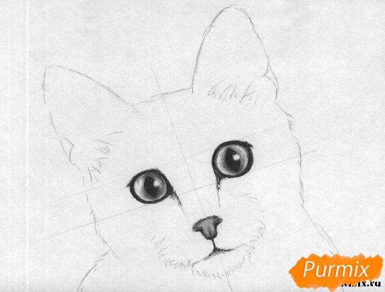 Рисуем портрет кошки породы египетская мау - шаг 3