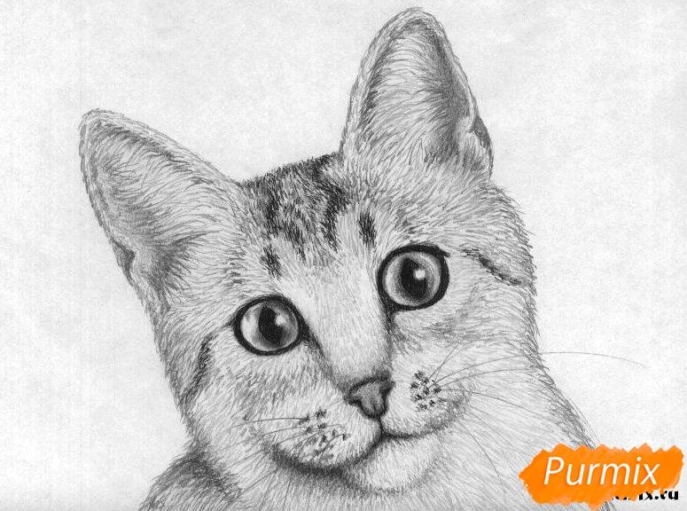 Рисуем портрет кошки породы египетская мау - шаг 5