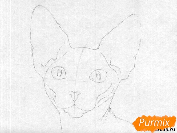 Рисуем кошку породы сфинкс - шаг 1