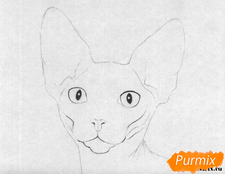 Рисуем кошку породы сфинкс - шаг 2