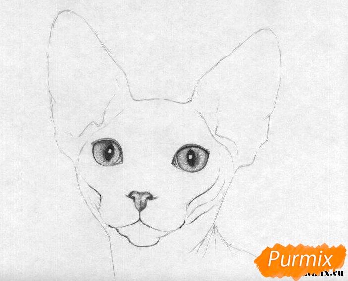 Рисуем кошку породы сфинкс - шаг 3