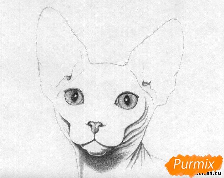 Рисуем кошку породы сфинкс - шаг 4