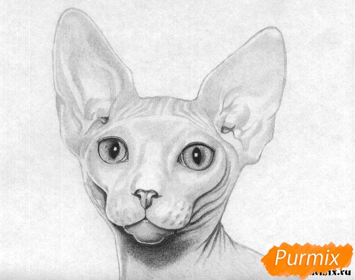 Рисуем кошку породы сфинкс - шаг 5