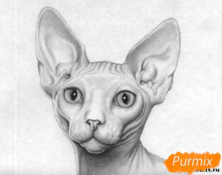 Рисуем кошку породы сфинкс - шаг 6
