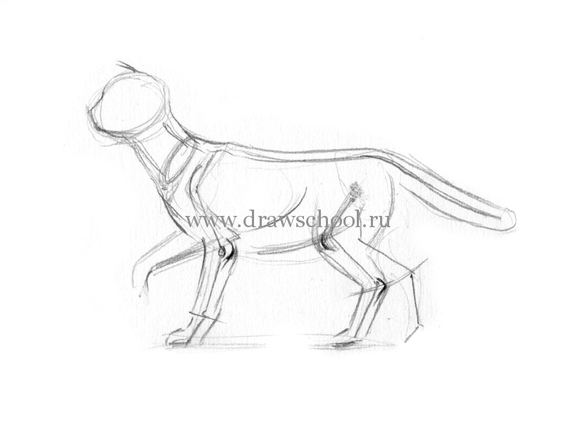 Рисуем кошку в движении
