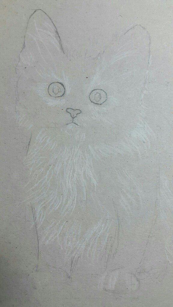 Рисуем милого котенка цветными карандашами - шаг 2