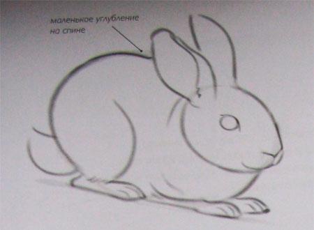 Рисуем кролика карандашами - шаг 3