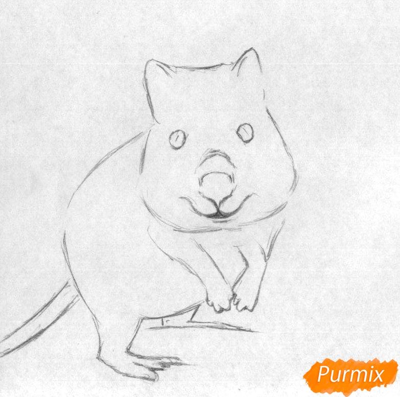 Рисуем квокка простыми карандашами и чёрной ручкой - шаг 1