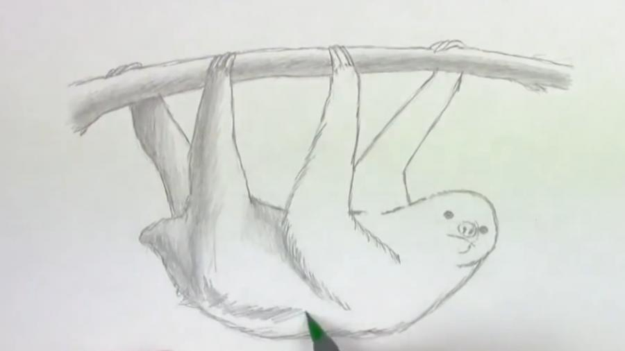 Рисуем ленивца - шаг 5