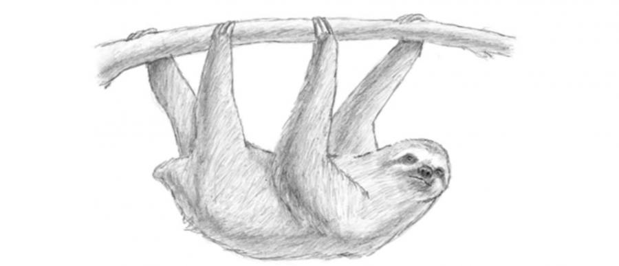 Рисуем ленивца - шаг 6