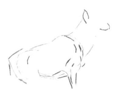 Рисуем лесного канадского оленя - шаг 3