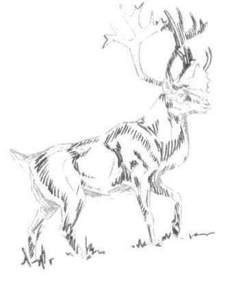 Рисуем лесного канадского оленя - шаг 7