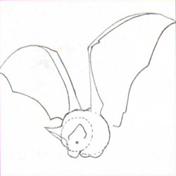 Рисуем летучую мышь - шаг 2