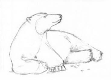 Рисуем лежащего белого медведя