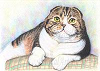 лежащего кота цветными карандашами