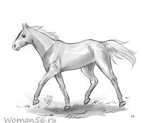 Фото лошадь в движении карандашом