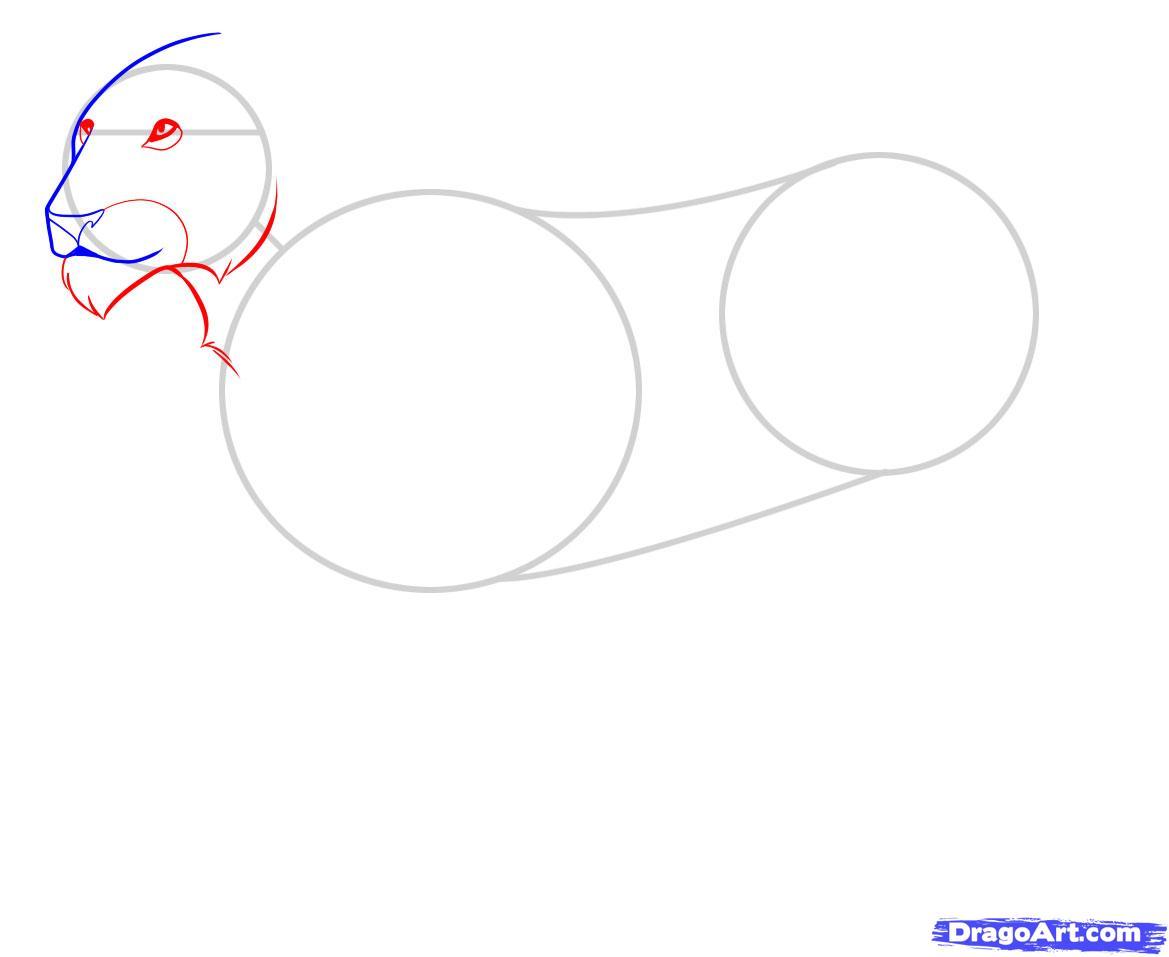 Рисуем львицу - шаг 3