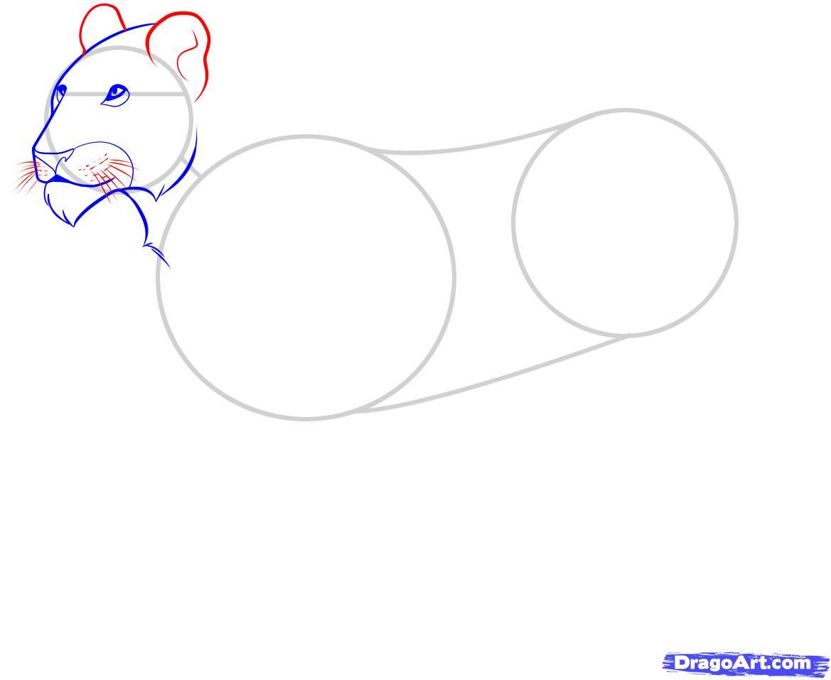 Рисуем львицу - шаг 4