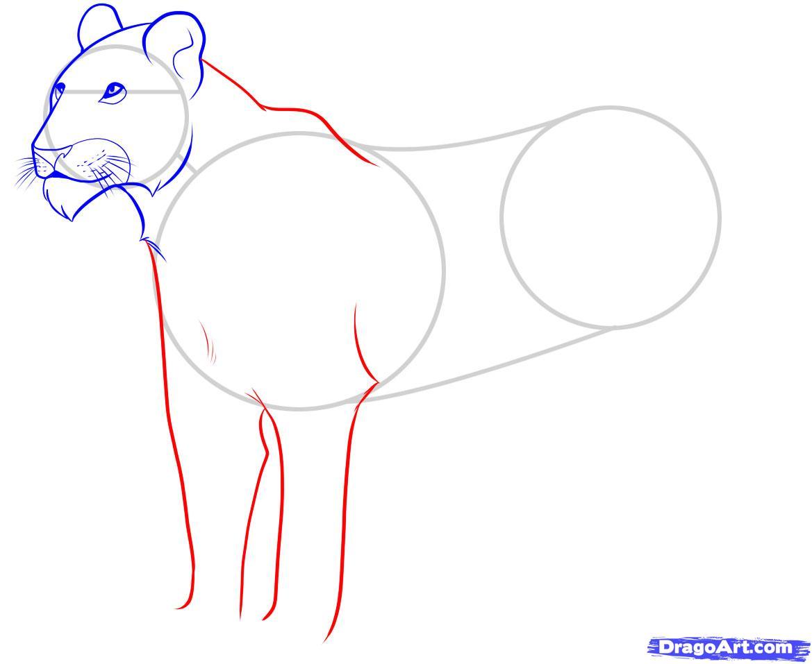Рисуем львицу - шаг 5