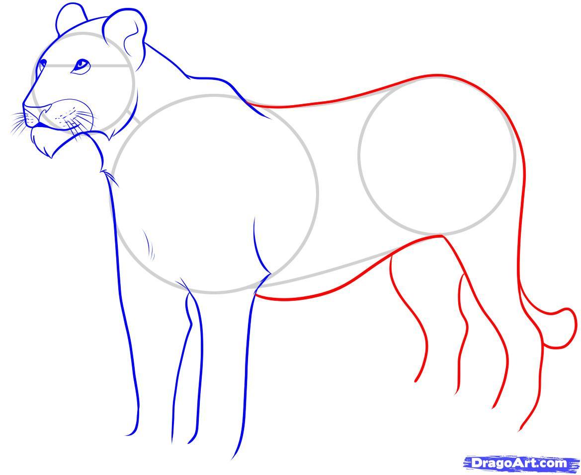 Рисуем львицу - шаг 6