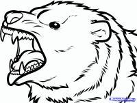 морду медведя гризли карандашом