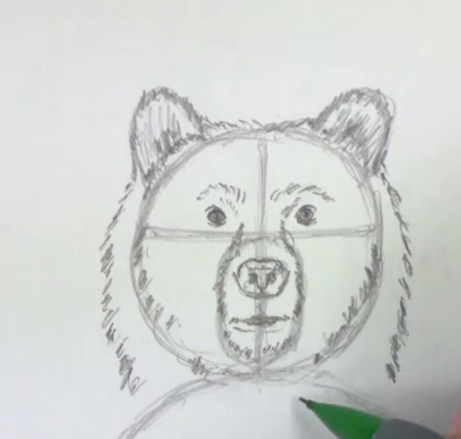 Рисуем медведя стоящего на задних лапах - шаг 3