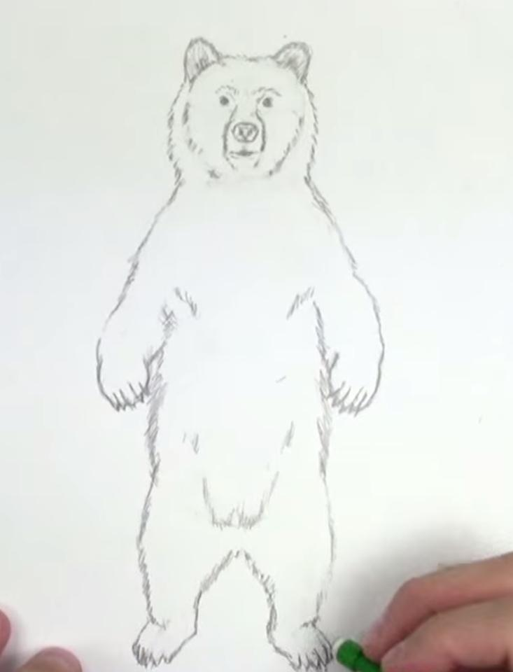 Рисуем медведя стоящего на задних лапах - шаг 4