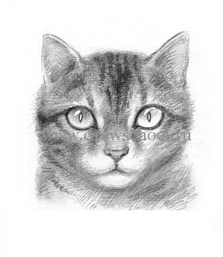 Рисуем мордочку кошки простым - шаг 11