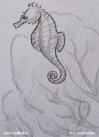 морского конька карандашом