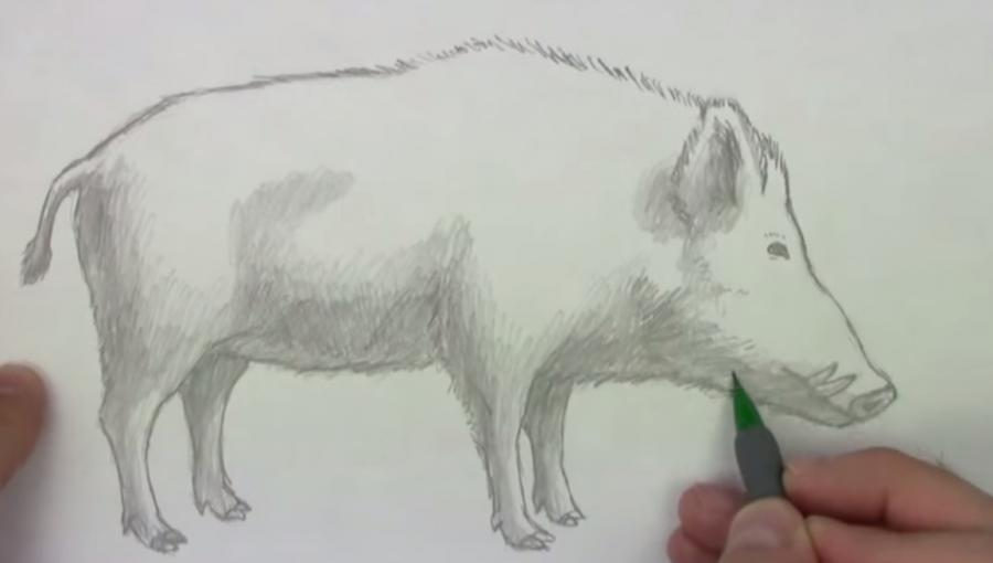 Урок рисования тигр щетина кабана