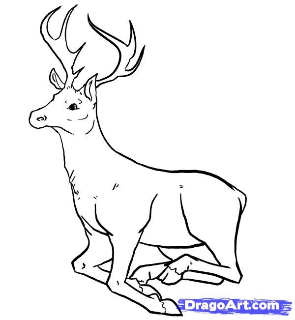 Рисуем оленя - шаг 11