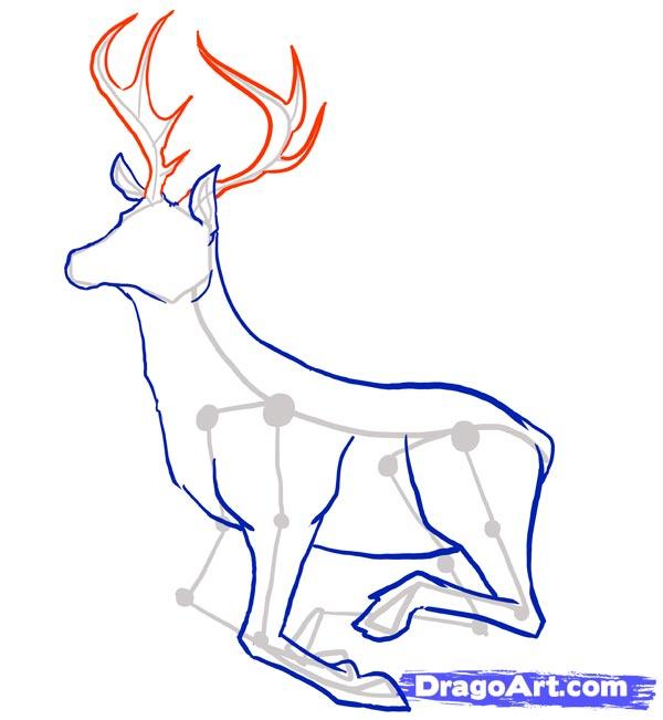 Рисуем оленя - шаг 5