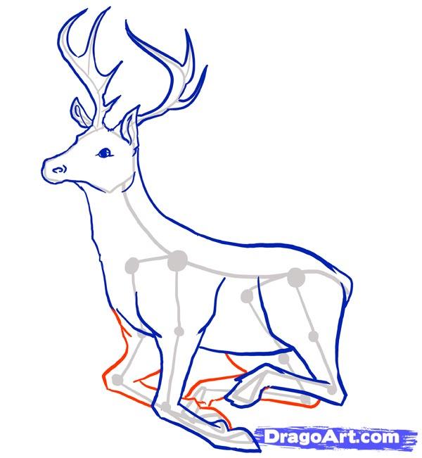 Рисуем оленя - шаг 8