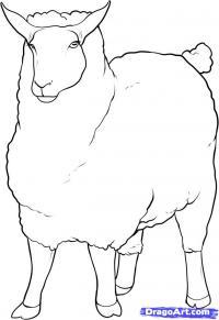 овцу карандашом