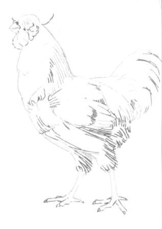 Рисуем петуха - шаг 4