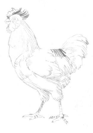 Рисуем петуха - шаг 6