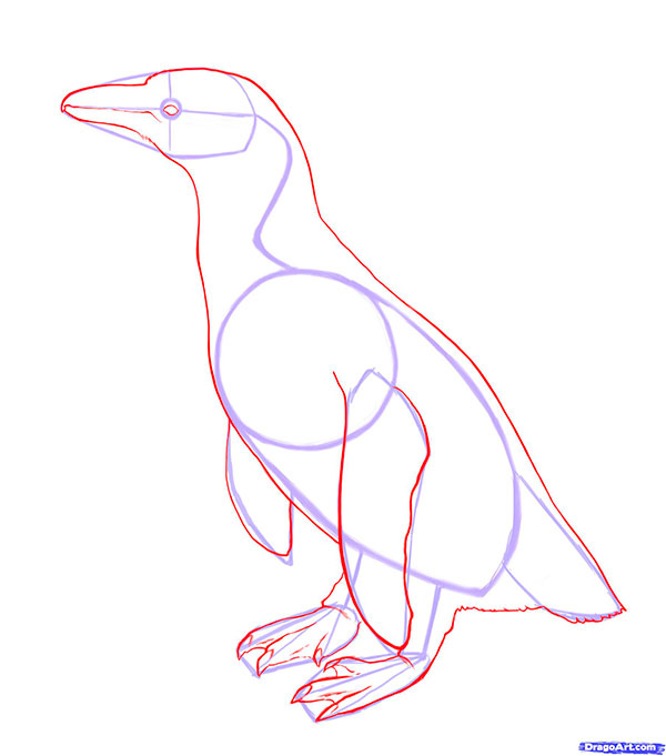 Рисуем пингвина для начинающих - шаг 3