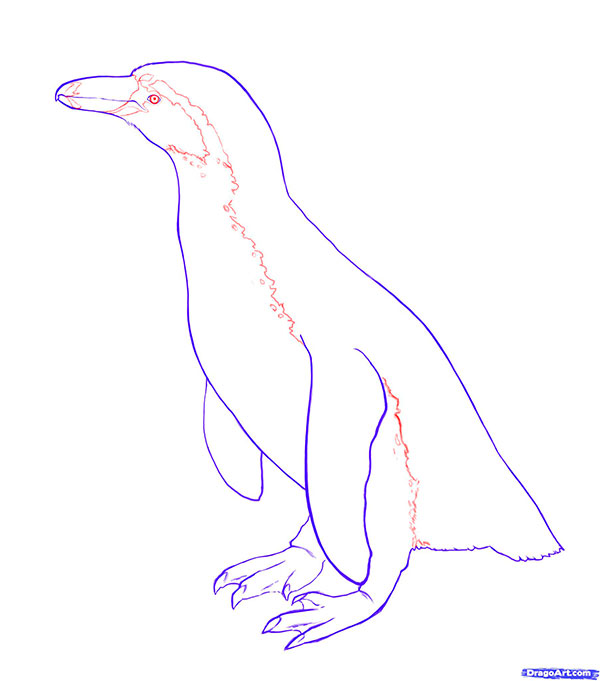 Рисуем пингвина для начинающих - шаг 4