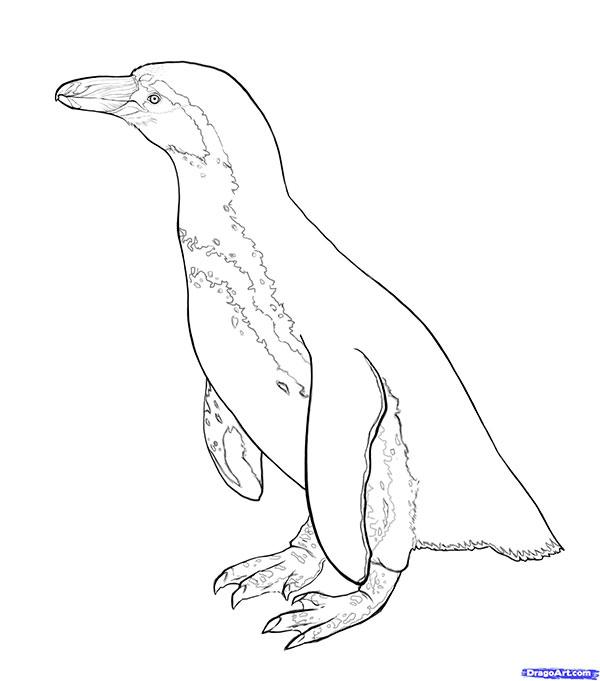 Рисуем пингвина для начинающих - шаг 6