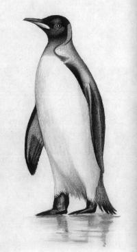 пингвина карандашом
