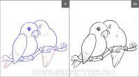двух влюбленных попугаев