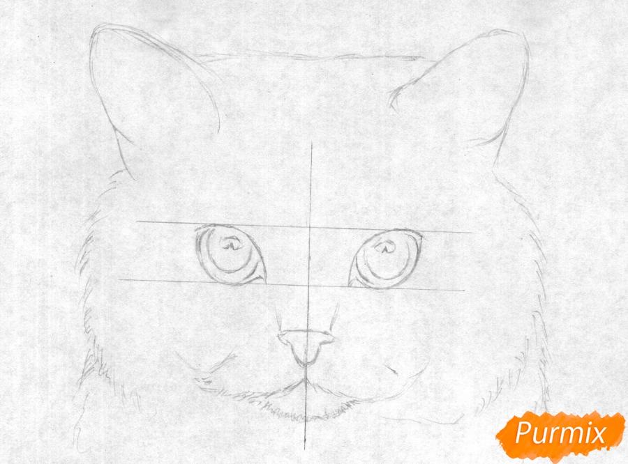 Рисуем портрет британской короткошерстной кошки карандашами - шаг 1