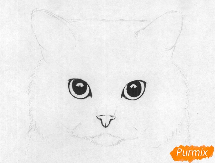 Рисуем портрет британской короткошерстной кошки карандашами - шаг 2
