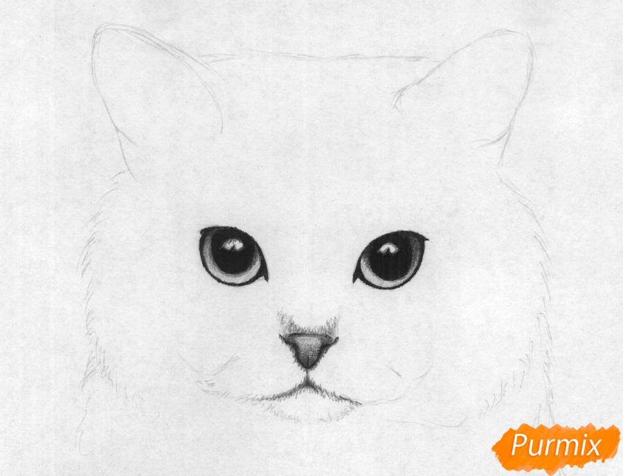 Рисуем портрет британской короткошерстной кошки карандашами - шаг 3