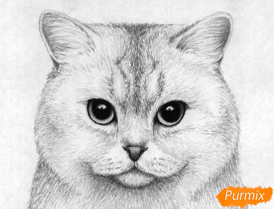 Рисуем портрет британской короткошерстной кошки карандашами - шаг 5