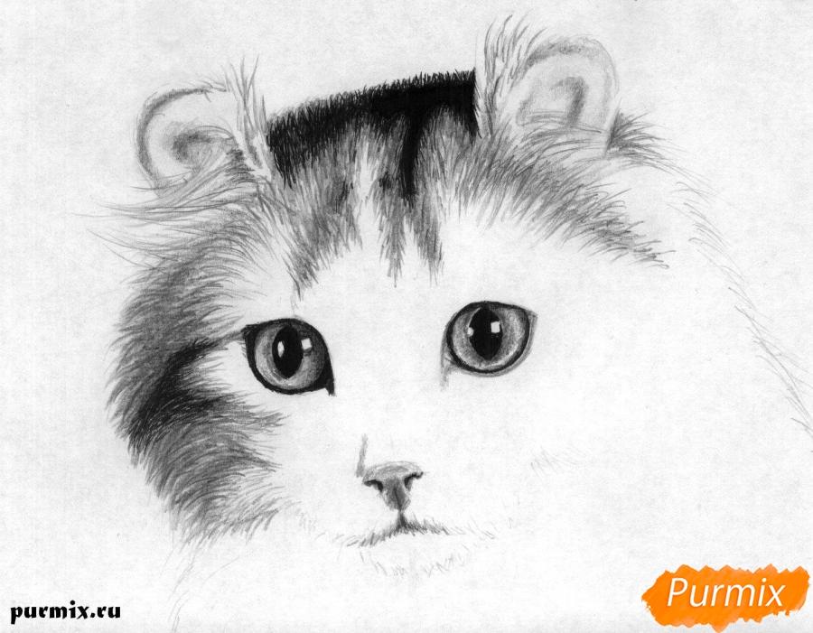 Рисуем портрет кошки породы Американский кёрл - шаг 4