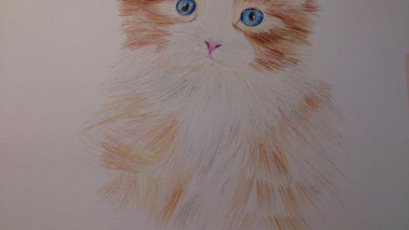 Рисуем пушистого котенка цветными карандашами - шаг 10