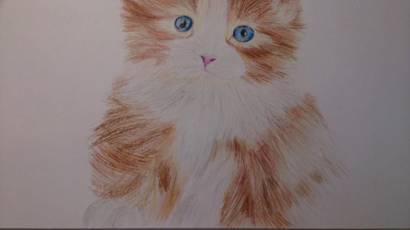 Рисуем пушистого котенка цветными карандашами - шаг 11