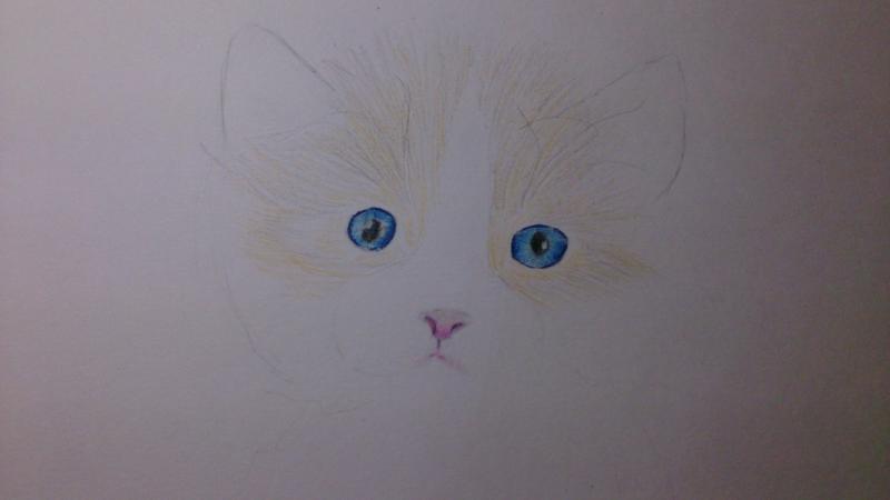 Рисуем пушистого котенка цветными карандашами - шаг 3