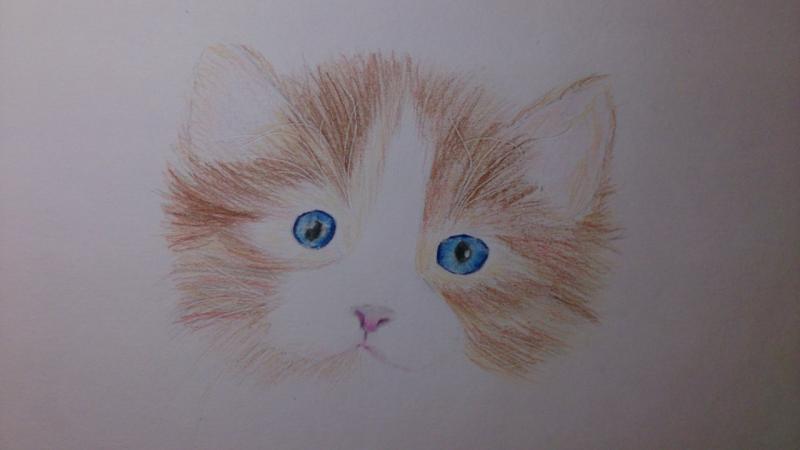 Рисуем пушистого котенка цветными карандашами - шаг 5